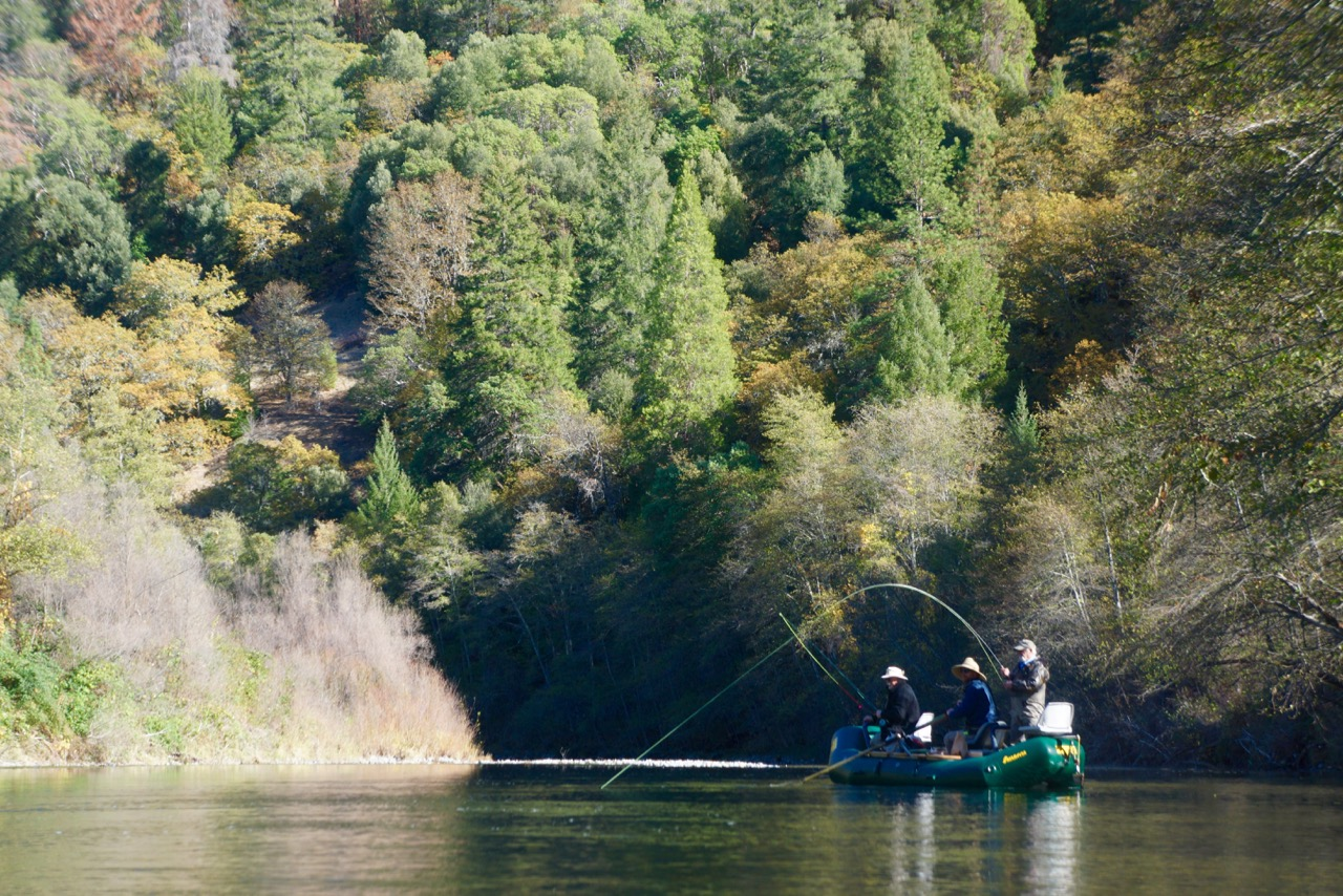 California fly fishing fish kennedy brothers for Fly fishing northern california