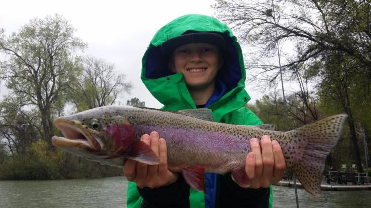 big rainbow trout- steelhead caught fly fishing in Redding with The Fly Shop
