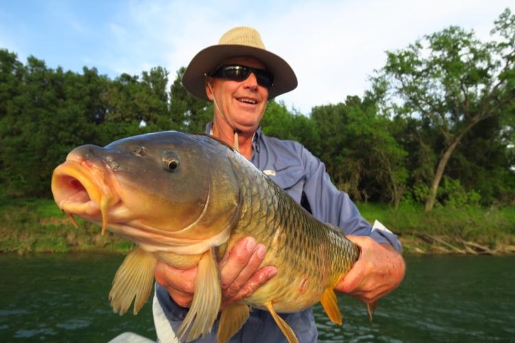 fly angler lands huge carp on Lower Sac river