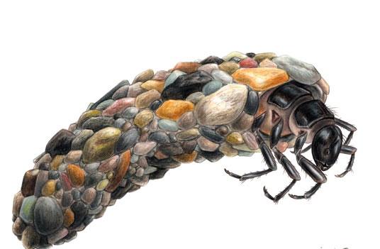 caddis-october-caddis-larva_fotor