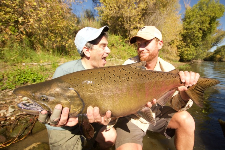Chinook salmon and fly fishing