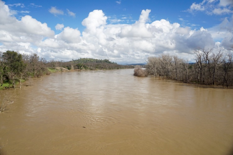 Here is a view of the river looking upstream of Bend Bridge. Notice the water running through the trees along the banks.