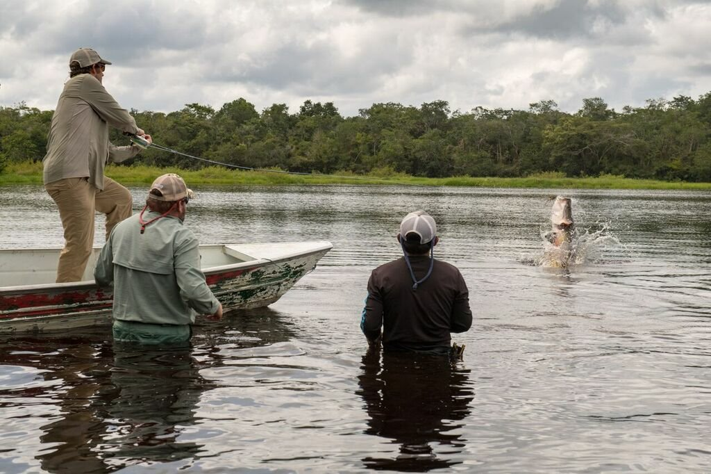 An angler fights a jumping arapaima on the fly