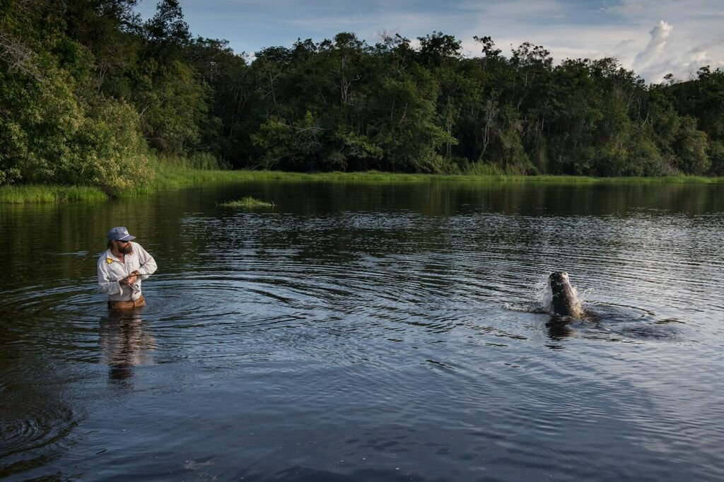 Oliver White fighting an arapaima with a fly rod