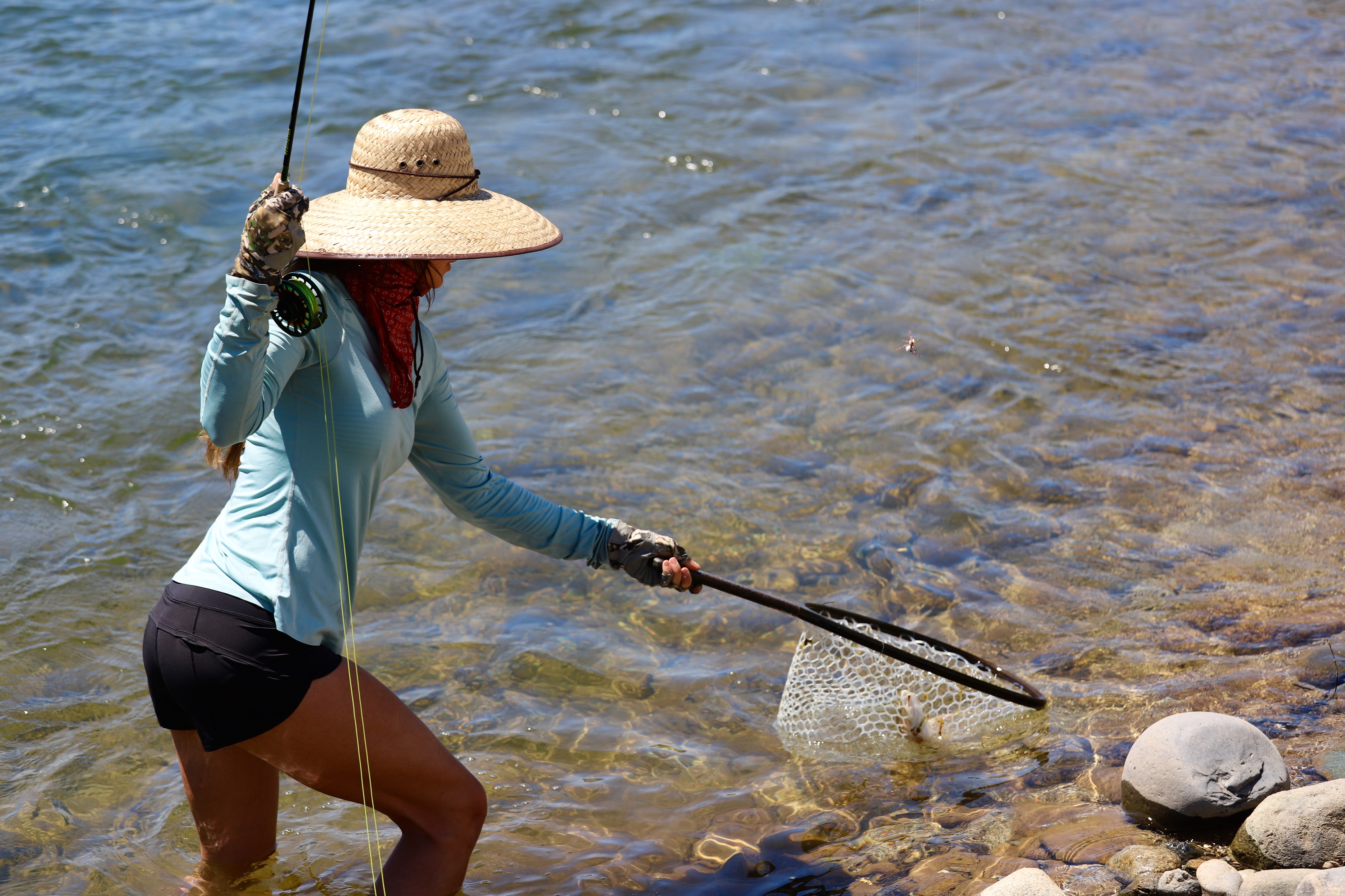 Woman fly fishing landing a fish on the Yuba River in a hat